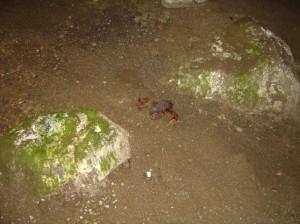 Blocs portant des figurations (masquées par la végétation) et faune cavernicole spécifique de grands crabes de terre.